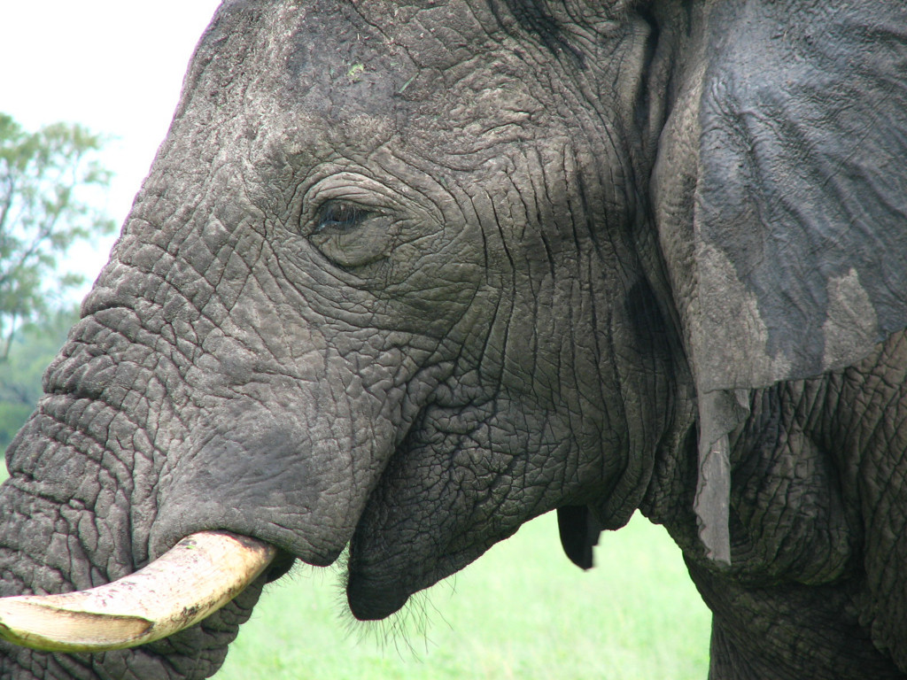 Mi primer gran elefante de cerca