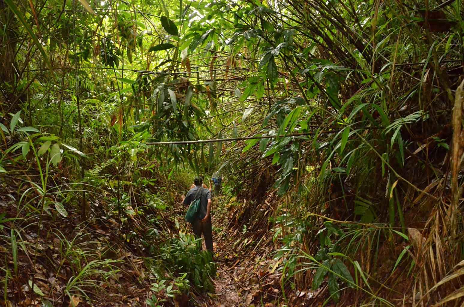 Trekking por Luang Namtha