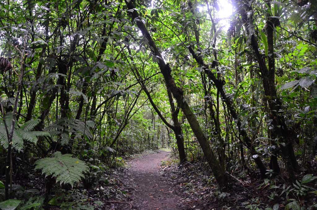Continuación del sendero y donde se aprecia el cambio de tipo de bosque