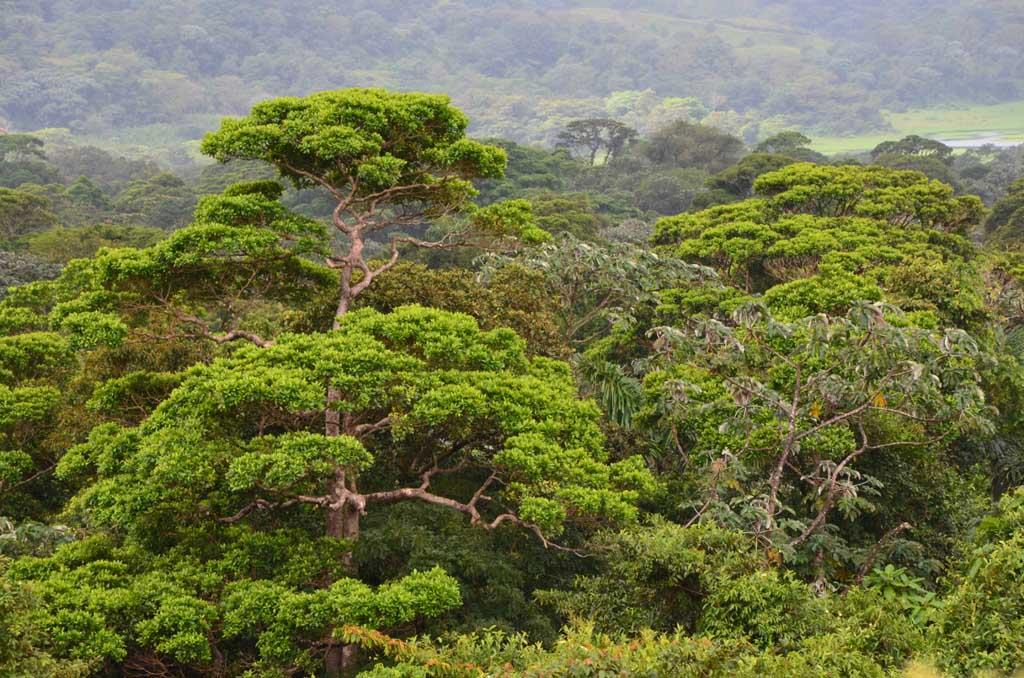 El bosque que se aprecia desde el mirador