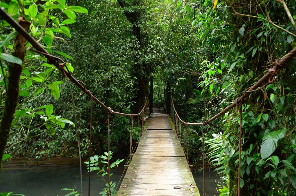 Puentes para acceder al Teñidero (Ruta Río Celeste)