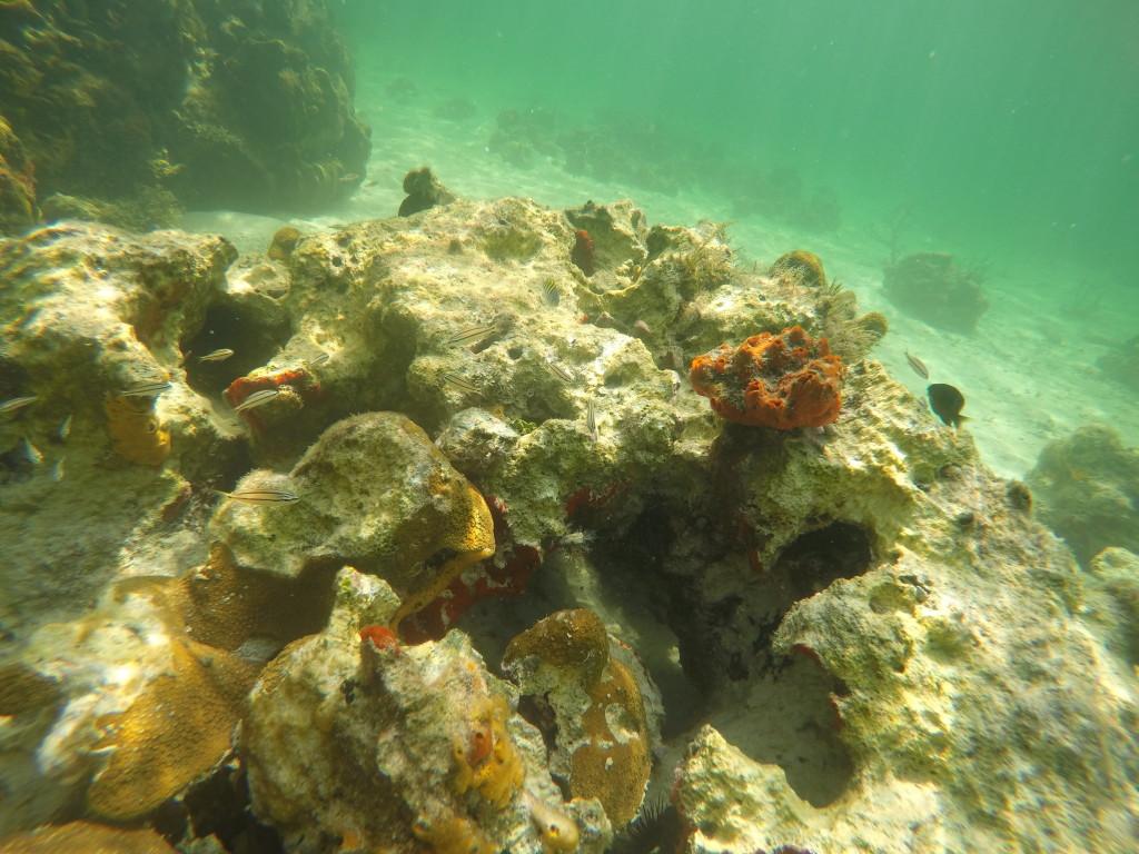 Snorkeling en Coral Bay
