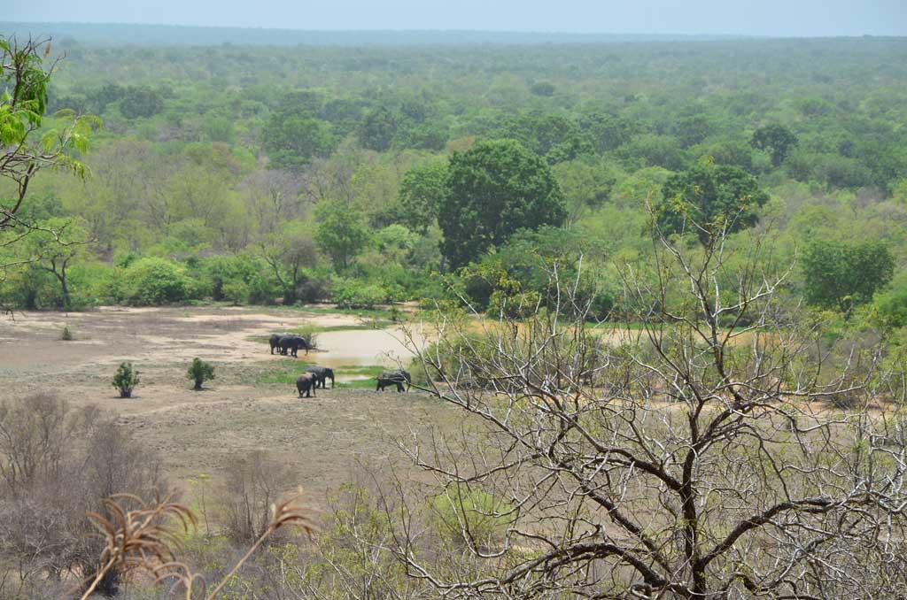 Elefantes desde la habitación del hotel de Mole National Park