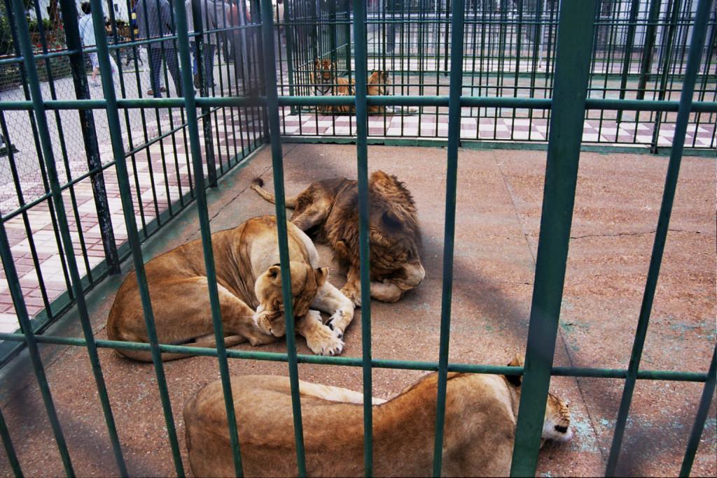 Los zoológicos son lugares donde los animales son obligados a estar en espacios reducidos fuera de su hábitat natural. Foto cedida por FAADA