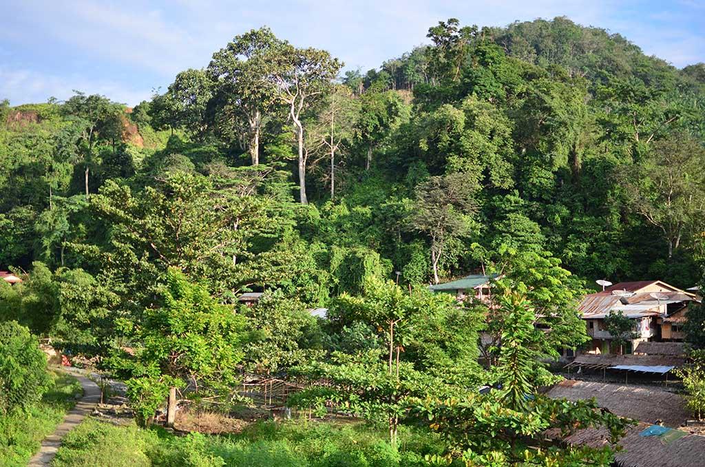 Vistas del Bukit Lawang