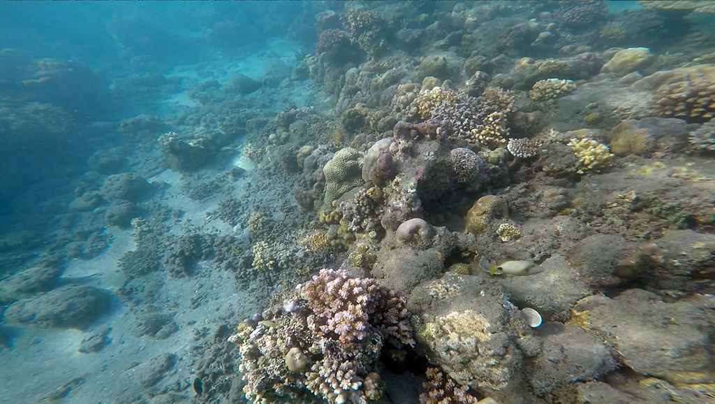 Corales de Pemuteran