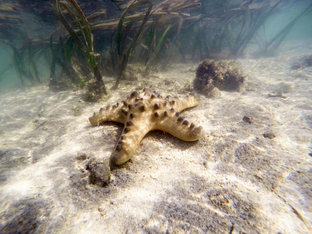 Estrella de mar en la playa de Sanur, Bali