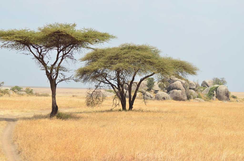 África, Tanzania, Serengueti, safari