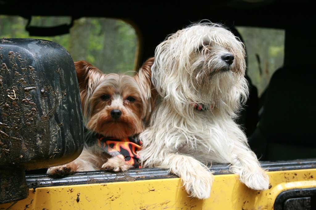 Viajar perros ferry