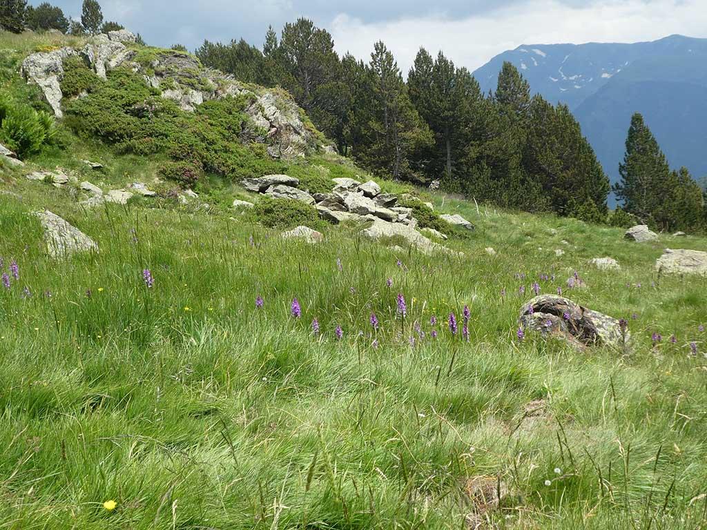 Andorra, otoño en la montaña