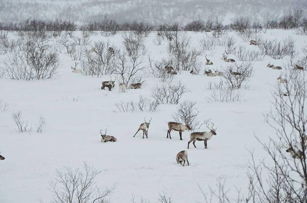 los sami en Noruega