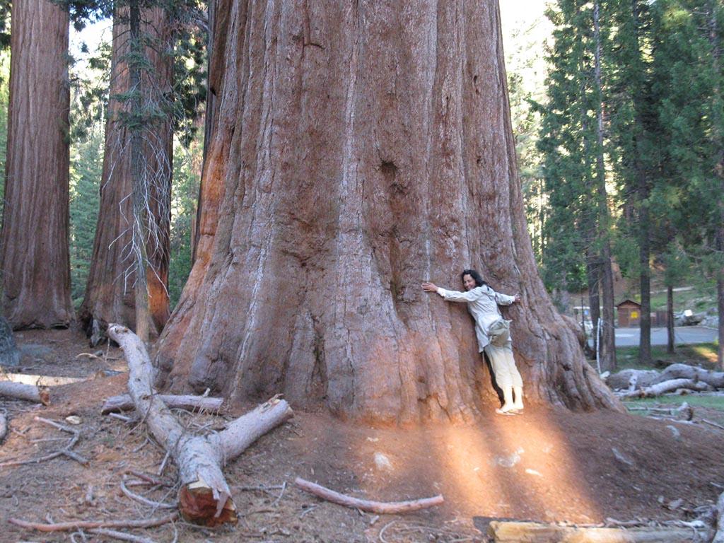 qué ver en la Costa Oeste de Estados Unidos, Sequoia National Park