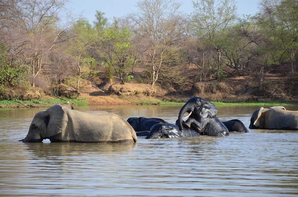Manada de elefantes en el Parque Nacional de Mole