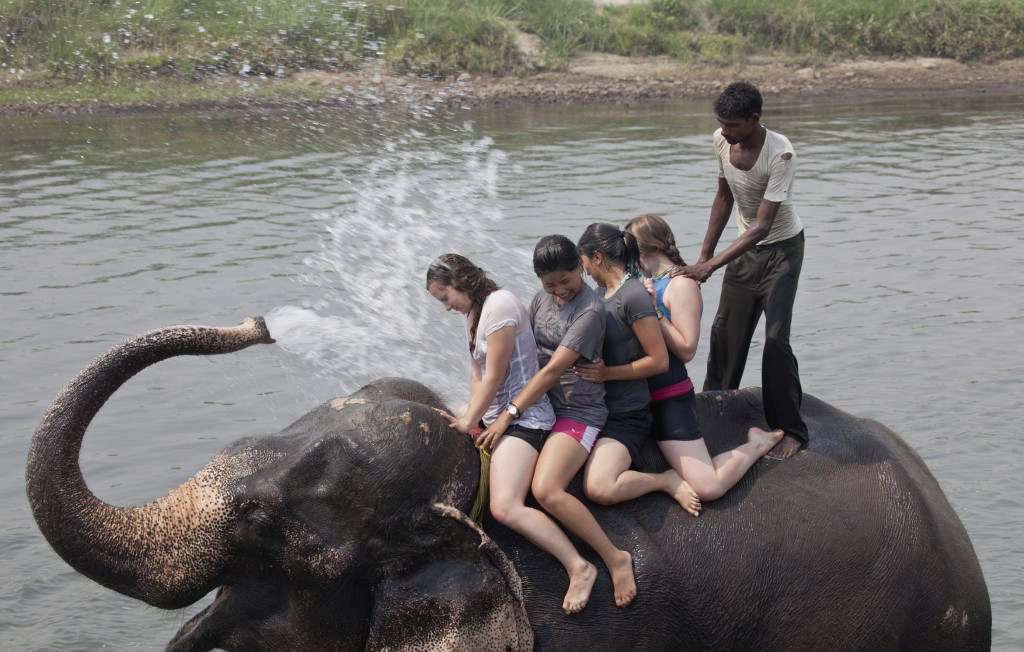 Si visitas un centro de rescate, recuerda que NO DEBES subirte a un elefante. Foto cedida por FAADA
