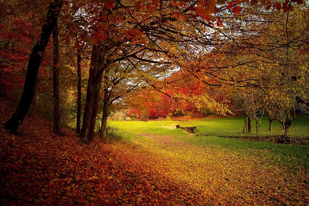 La luz del otoño en el bosque y la montaña